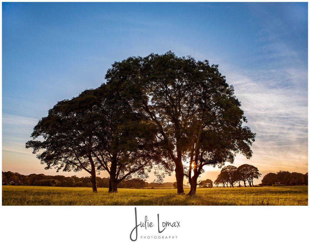 Julie Lomax Calendar 2017_0011